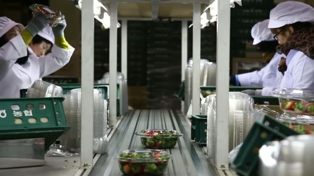 women workers pick strawberries by hand growing in a greenhouse in nonsan south chungcheong province south korea on thursday dec 12 close shots a... - agricultural cooperative stock videos and b-roll footage