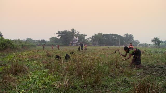 vídeos y material grabado en eventos de stock de women working in field and digging in india - grupo pequeño de animales
