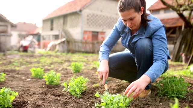 women working in the garden - gardening stock videos & royalty-free footage