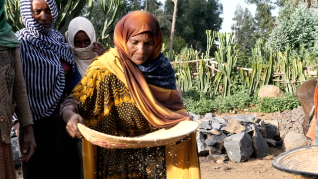women working sifting the wheat grains - horn of africa stock videos & royalty-free footage