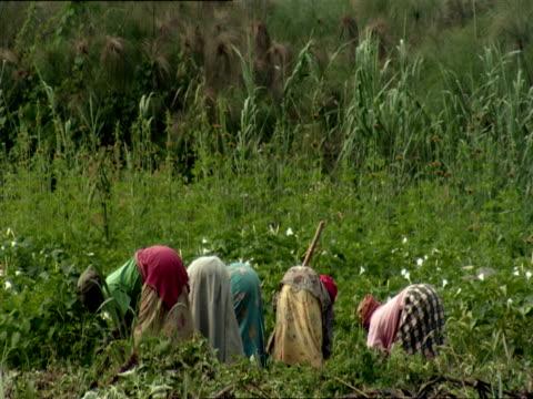 ws women working with sickles and hoes in crop field / kigali, rwanda - キガリ点の映像素材/bロール
