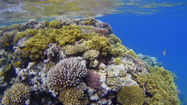 Wunderbare Unterwasserwelt am Korallenriff mit vielen tropischen Fischen / Rotes Meer