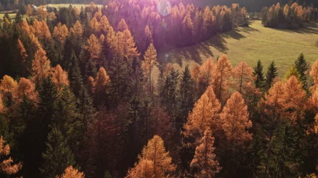 Luftaufnahme wunderbaren sonnendurchflutetes Tal, Wald im Herbst