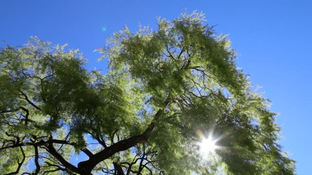 wonderful sunny day over the tree - tropical tree stock videos & royalty-free footage