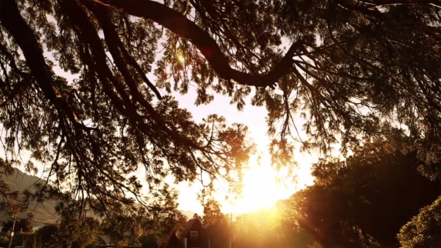 wonderful sunset over the tree - rural scene stock videos & royalty-free footage