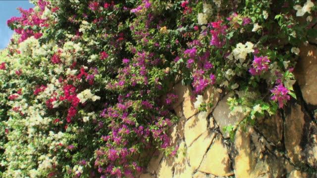 ワンダルフ壁の花女性ブーゲンビリアスイート、香りゼム