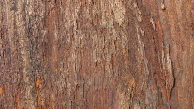 wood background slide up shot - plant bark stock videos & royalty-free footage