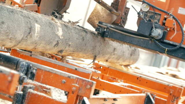 wood cutting machine board log in a sawmill