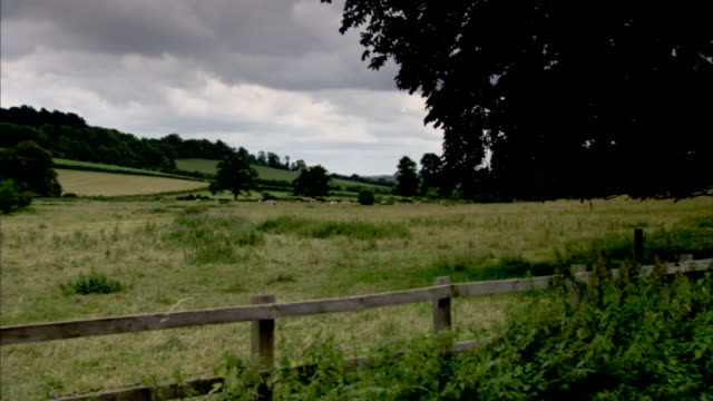 a wood fence protects a trampled pasture. - cattle stock videos & royalty-free footage