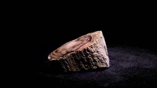 vidéos et rushes de fossile de bois poli - vue partielle