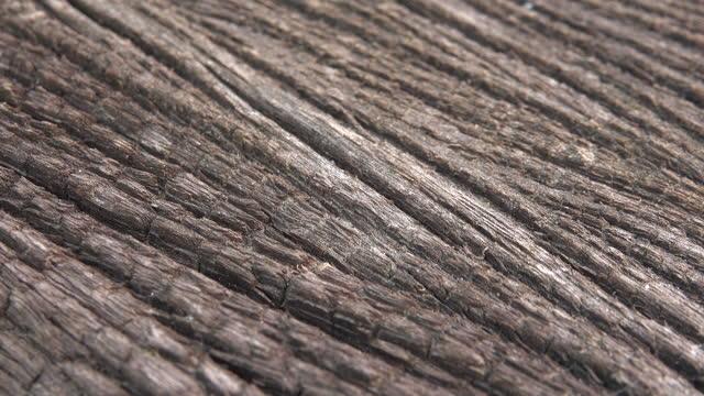 wood grain - wood grain stock videos & royalty-free footage