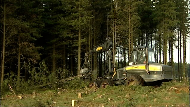Biomass products Pickering Langdale Forest EXT SEQUENCE of shots of pine trees being harvested by mechanical vehicle with mechanical arm which cuts...