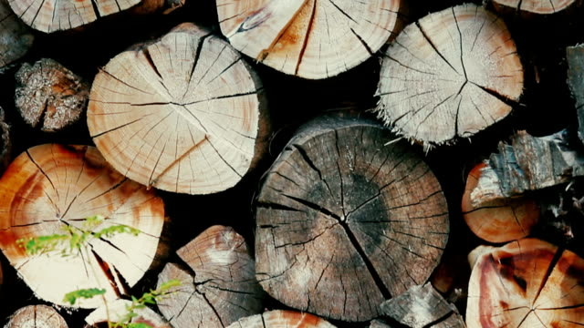 wood pile for firewood - industria forestale video stock e b–roll