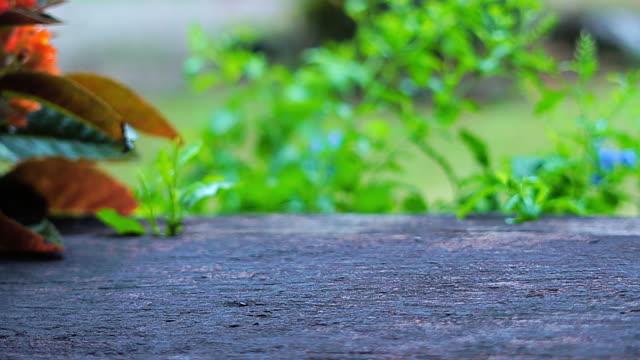 holztisch auf grünen natürlichen bokeh hintergrund. - tisch stock-videos und b-roll-filmmaterial