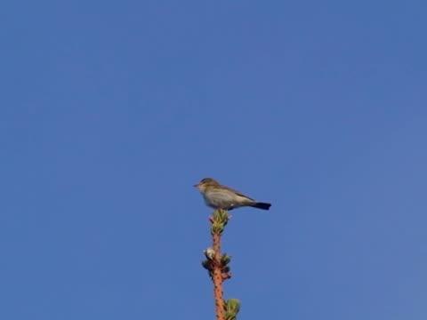 Wood Grasmückenartige Bird Sie auf Baumkrone