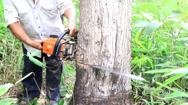 vídeos de stock, filmes e b-roll de woodcutter trabalhando na floresta com uma serra de cadeia de árvores - protetor de ouvido