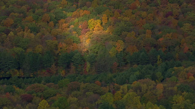 MS AERIAL Wooded area with autumn colors nesting in trees / Connecticut, United States