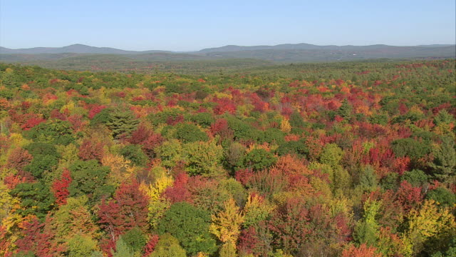 AERIAL Wooded area with fall foliage / Massachusetts, United States