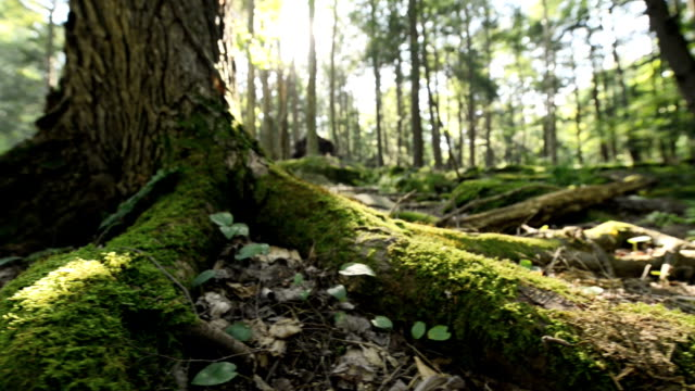 stockvideo's en b-roll-footage met wooded forest ground - laag camerastandpunt