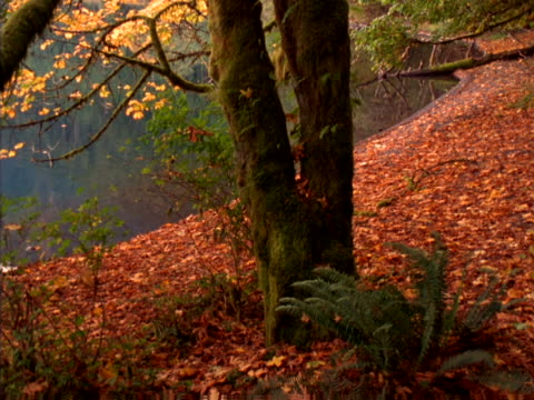 wooded lakeshore with fallen leaves - lakeshore stock videos & royalty-free footage