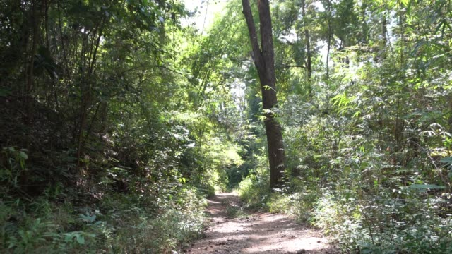 Wooded Path  in the forest
