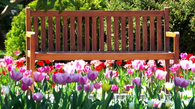 wooden bench in spring - park bench stock videos & royalty-free footage
