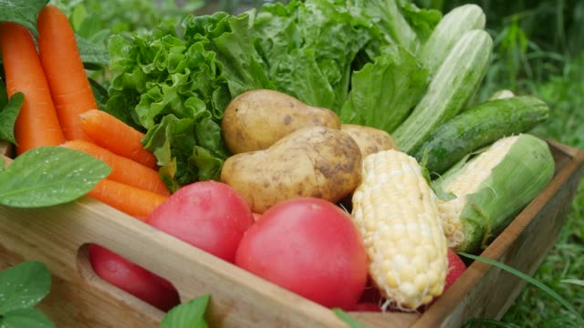 a wooden box with harvested vegetable - carrot stock videos & royalty-free footage