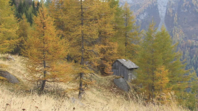ms, wooden cabin in autumn forest, dolomites, alps, italy - hut stock videos & royalty-free footage
