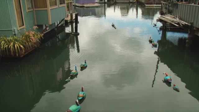 vídeos de stock e filmes b-roll de ws ha wooden ducks floating on water near sausalito houseboats / san francisco, california, usa - barco casa