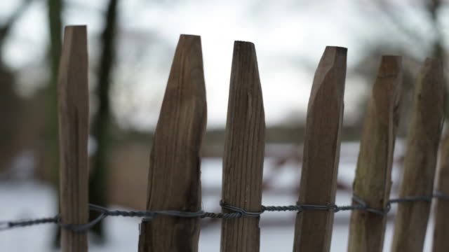 Wooden fence in a winter forest, slow panning shot