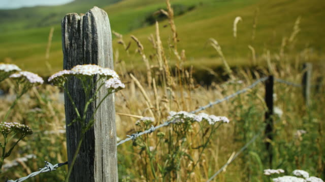 A wooden fence post on a sunny day as cars pass by on a country road