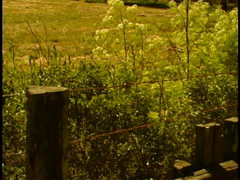 wooden fence - zaun stock-videos und b-roll-filmmaterial