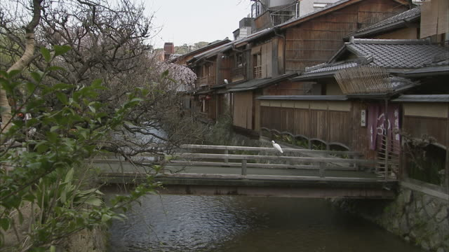 ms wooden houses and bridge on canal, gion, kyoto, japan - gion stock videos and b-roll footage