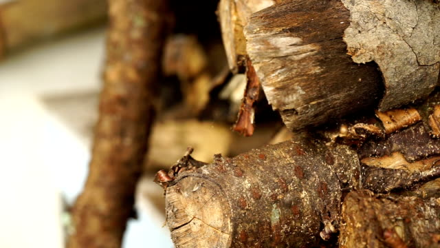 wooden logs of pine - lumberyard stock videos and b-roll footage