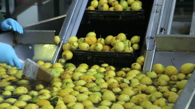 stockvideo's en b-roll-footage met wooden paddle pushing bergamot fruit onto conveyor belt at factory - sinaasappel