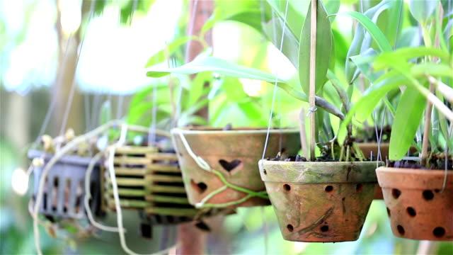 HD PANNING: Wooden Planter