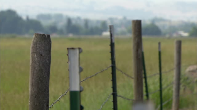 vídeos de stock e filmes b-roll de cu selective focus wooden post with barbed wire fence at edge of field / stevensville, montana, usa - poste de madeira