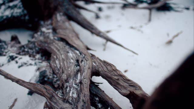 radice di legno - fuggire video stock e b–roll