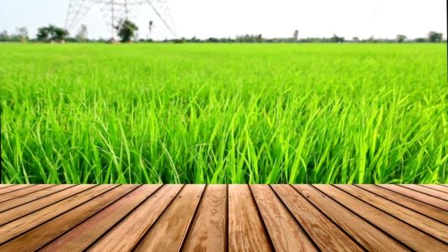stockvideo's en b-roll-footage met houten lijstbovenkant op rijstgebied dat in plantage bij platteland blaast - table top view