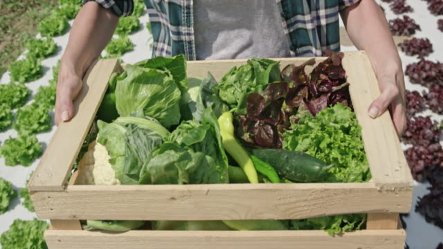 wooden vegetable crate being carried in the sunny field by a farmer - cauliflower stock videos & royalty-free footage