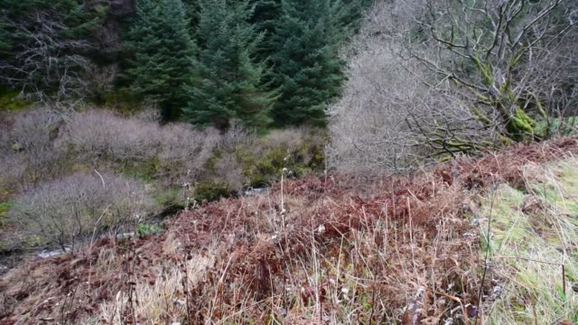 woodland along the fairy knowe path in ayrshire. - david johnson stock videos & royalty-free footage