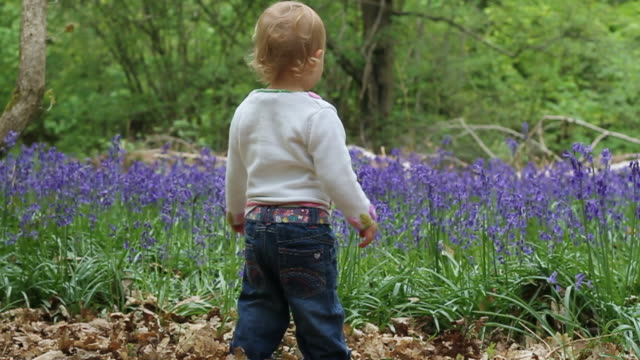 vídeos de stock e filmes b-roll de woodland bluebells - vida de bebé