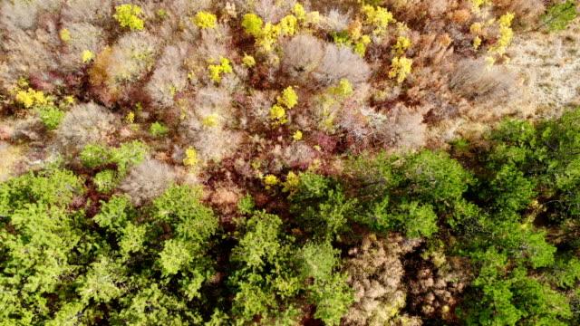 vídeos y material grabado en eventos de stock de woodland forest drone antenas - árbol de hoja caduca
