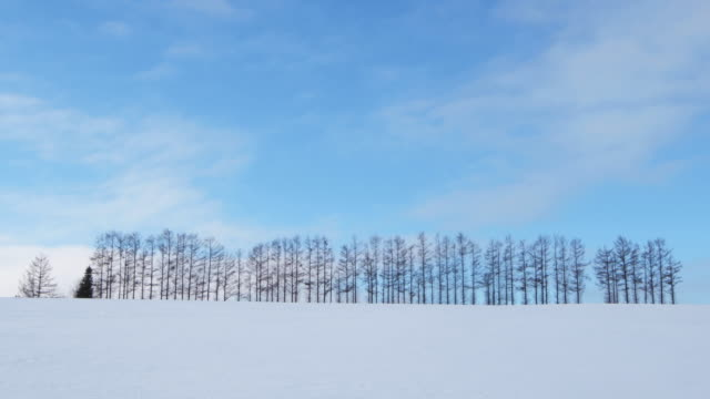 woodland landscape in japanese winter, wide - kamikawa subprefecture stock videos and b-roll footage