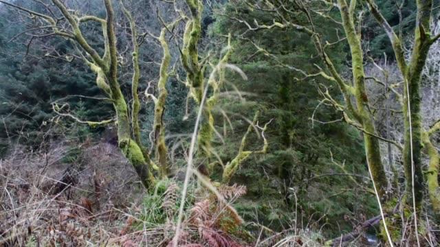 woodland on the fairy knowe walk in ayrshire. - david johnson stock videos & royalty-free footage