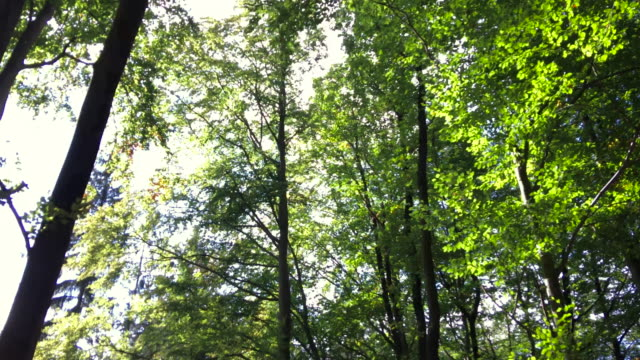 woodland spinning point of view - area selvatica video stock e b–roll