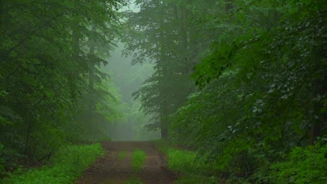 Woodland with morning fog, Freudenburg, Saargau, Rhineland-Palatinate, Germany, Europe