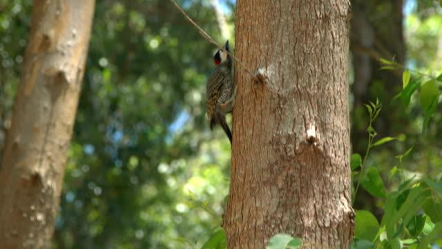 woodpecker on a tree. - woodpecker stock videos & royalty-free footage