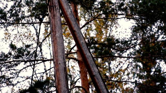 woodpecker - pole stock videos & royalty-free footage