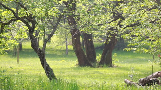 woods in spring, hd video - natural parkland stock videos & royalty-free footage